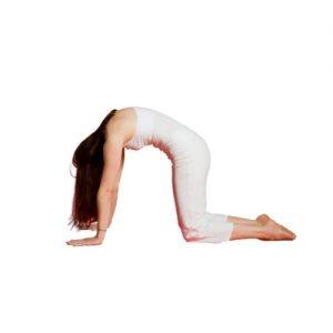 exercice de yoga dos - chat et vache